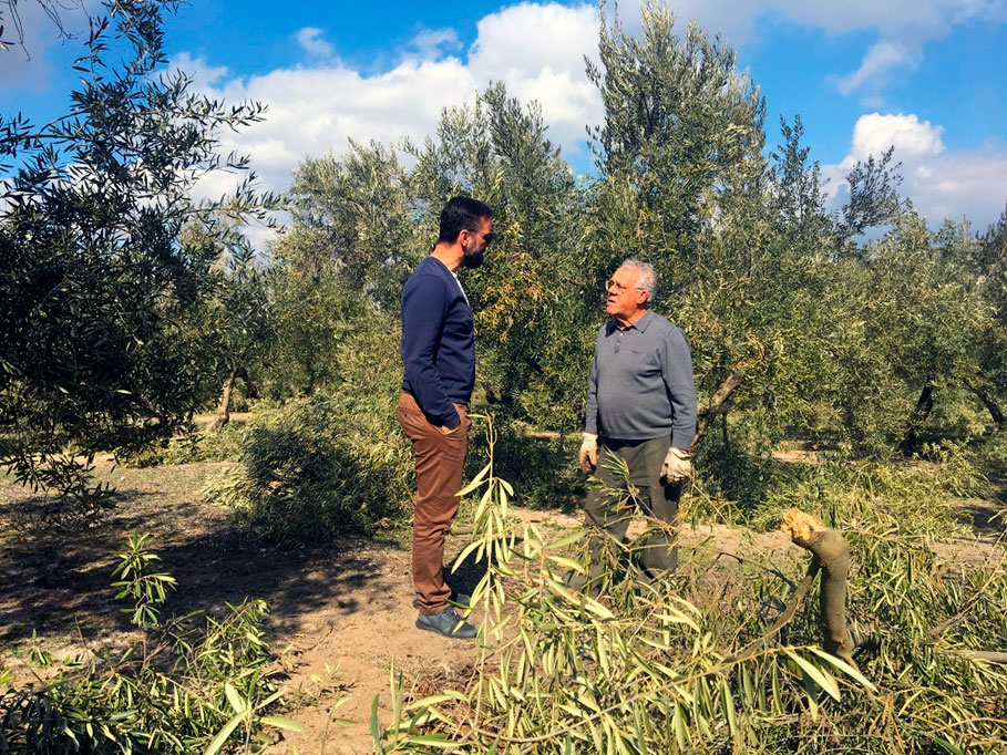 Poda olivo beneficios aceite oliva