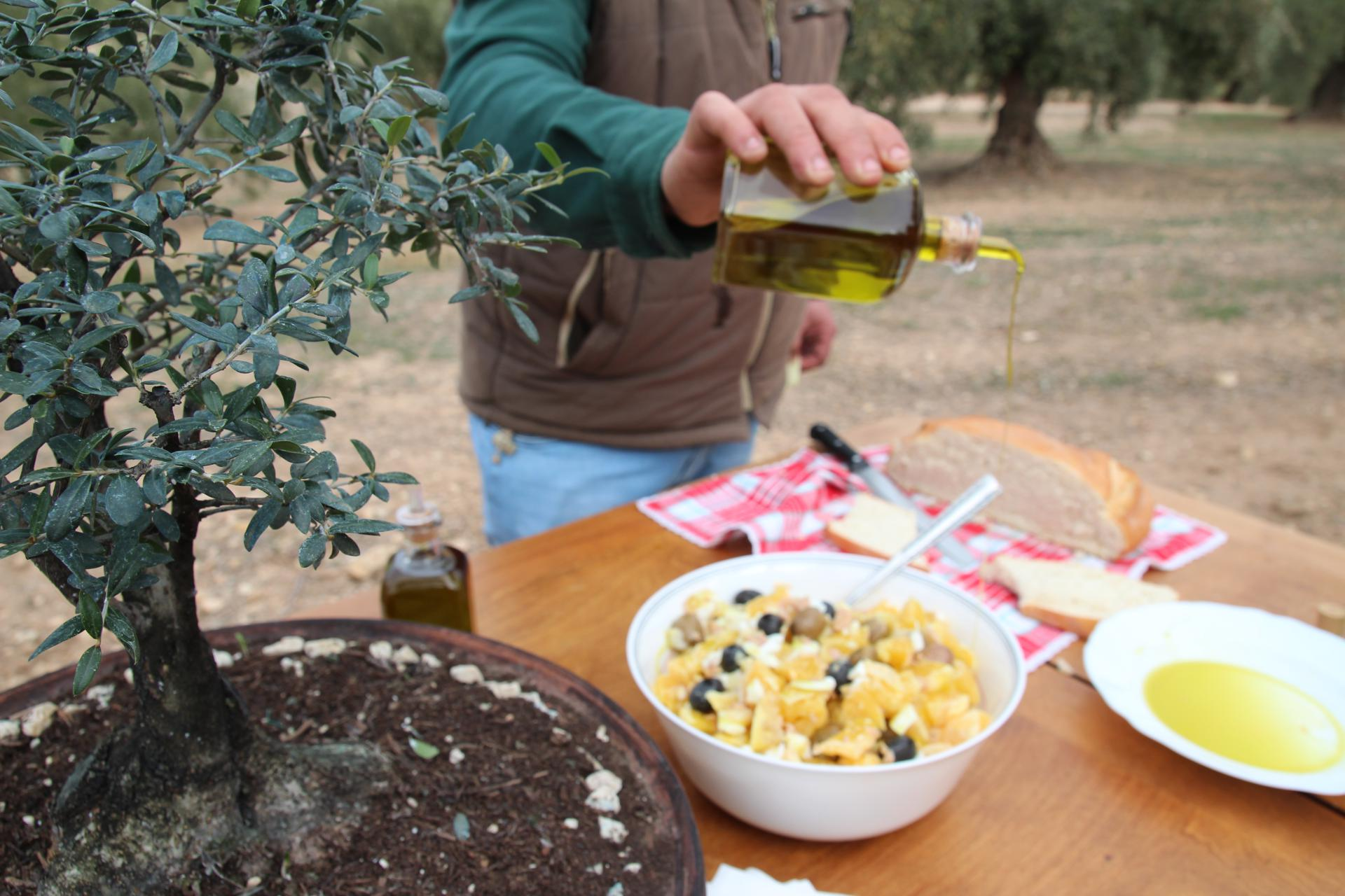extra oil olive spain andalucia 11