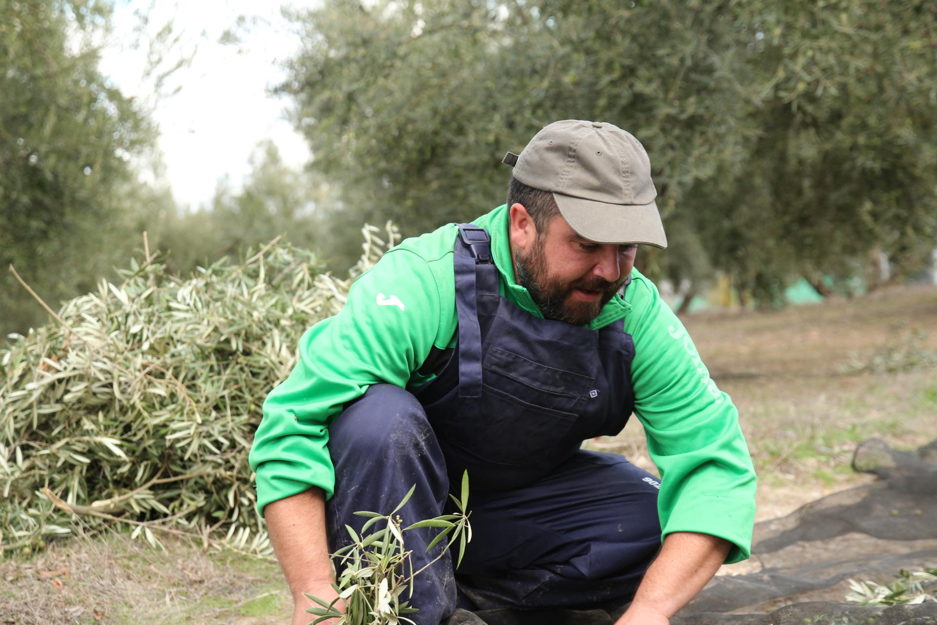 extra oil olive spain andalucia 5